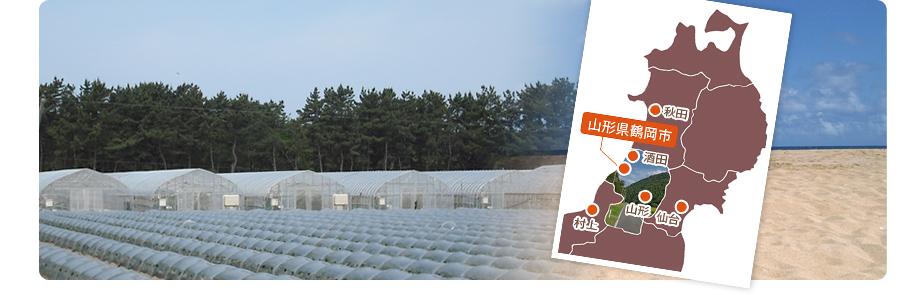 山形県鶴岡市にある窪畑ファーム